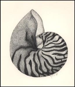 ACEO Sea Shell Prints