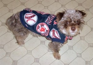 Red Sox Dog Coat